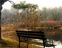 Bench and Pond